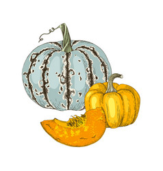 hand drawn fall pumpkins vector image