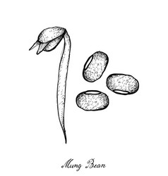 hand drawn of mung beans and bean sprout vector image