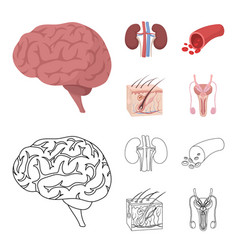 Brain kidney blood vessel skin organs set vector