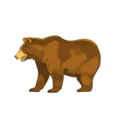 Color of bear grizzly isolated vector