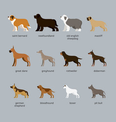 Dog breeds set giant and large size vector