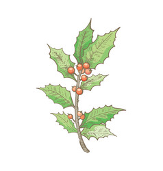 holly branch christmas decoration icon hand vector image