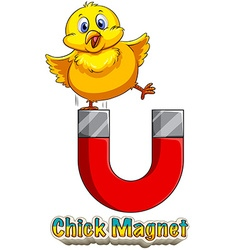 Chick attracted to magnet vector