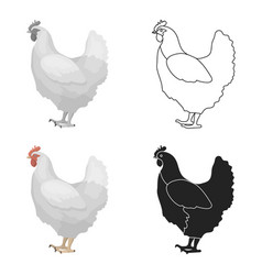 chicken icon in cartoon style isolated on white vector image