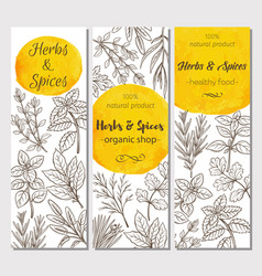 Sketch herbs and spices vector