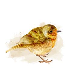 small sparrow watercolor cute bird vector image