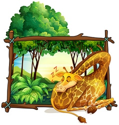 Wooden frame with giraffe in the jungle vector image