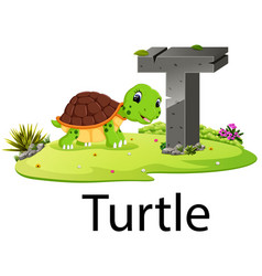 Zoo animal alphabet t for turtle vector