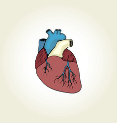 realistic heart vector image
