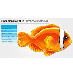 Cinnamon clownfish vector