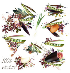 elements pears and flowers natural food concept vector image