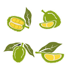 flat durian and cut piece tropical fruit vector image
