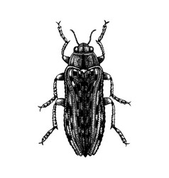 hand sketched jewel beetle insects collection vector image