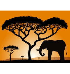 savannah elephant vector image
