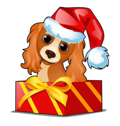 christmas gift box with a cute dog in cap vector image