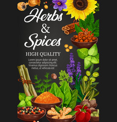 Herbs and spices seasonings shop vector