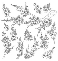 spring blossoming branches sketch vector image
