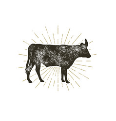 vintage hand drawn cow icon farm animal vector image