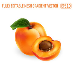 Whole apricot and half with pit on a white vector