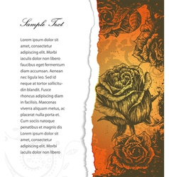 torn cardboard with roses vector image vector image