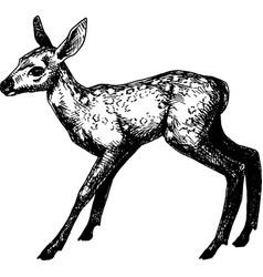 Baby deer vintage hand drawn vector