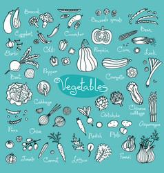 Set drawings of vegetables for design menus vector