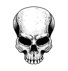 skull isolated on white background design element vector image