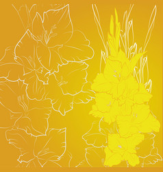 Yellow flowers gladiolus vector