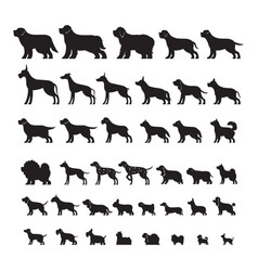 dog breeds silhouette set vector image