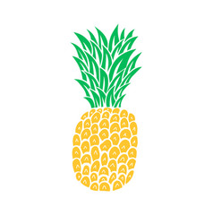 pineapple tropical fruit vector image