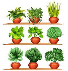 Different kinds of plants in clay pots vector