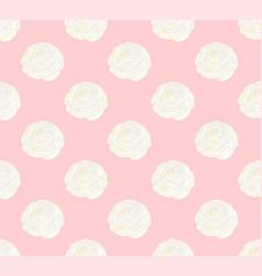 white ranunculus on pink pastel background vector image