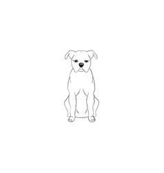 american staffordshire terrier cartoon dog icon vector image
