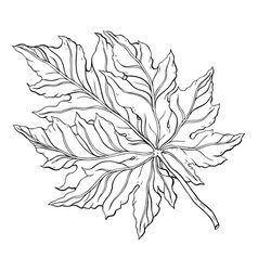 beautiful detailed leaf botanical hand drawn vector image