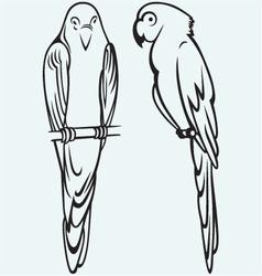 Parrots vector image