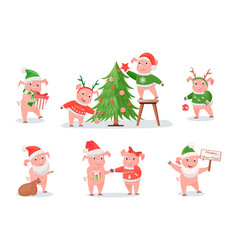 Pigs zodiac symbol of new year 2019 christmas vector