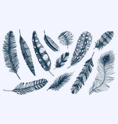 set rustic realistic feathers different vector image