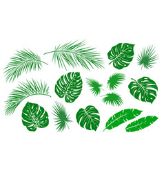 tropical hand drawn green palm leaves branches set vector image