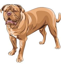 French mastiff vector