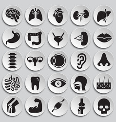 Human organs set on plates background for graphic vector