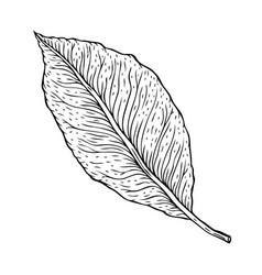 Beautiful detailed leaf botanical hand drawn vector
