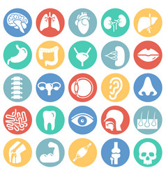 Human organs set on color circles white background vector