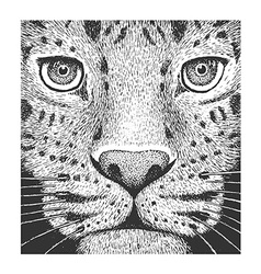 Leopard Engraving vector image