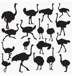 ostrich silhouettes vector image