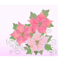 Rose Poinsettia vector image vector image