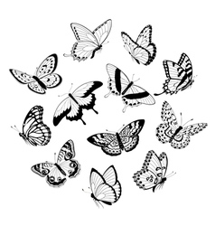 Flying black white butterflies vector image
