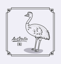 Australia emu in frame and monochrome silhouette vector