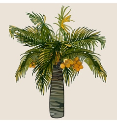 cartoon palm tree with coconuts vector image