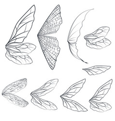 collection light wings design isolated on white vector image