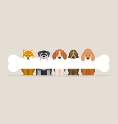 group of dog breeds holding bone vector image